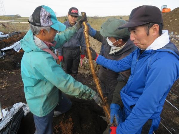 自然薯収穫!【キッチンブレス日記】