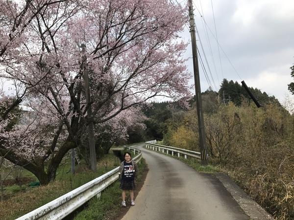 桜前線🌸到来【キッチン・ブレス日記】