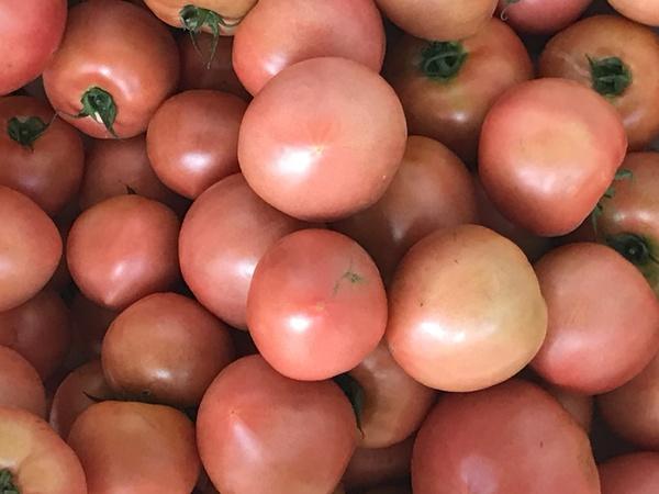 トマトが育った【キッチン・ブレスNEWS】