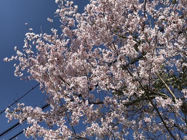 春の光やさしく【キッチン・ブレス日記】