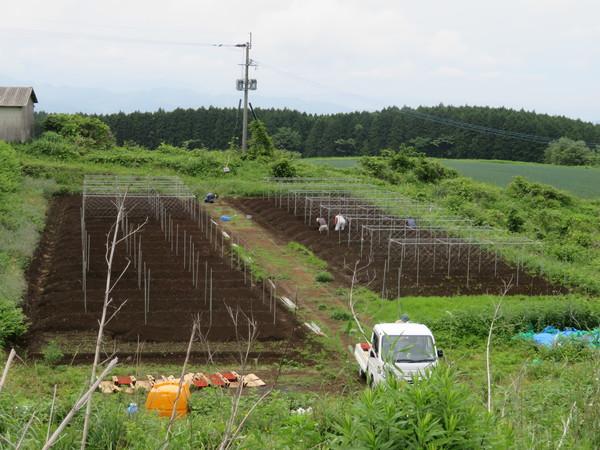 自然薯植え【キッチン・ブレスNEWS】