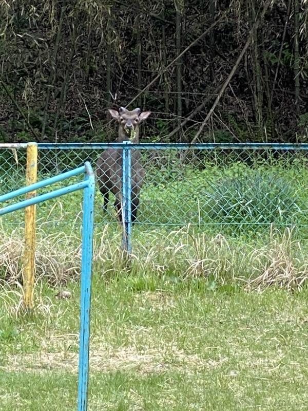鹿さん、こんにちわ!